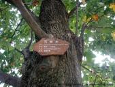 大江大海2011--馬掛樹掛馬掛:在富春江休息站拍的馬掛樹