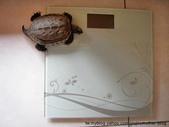 大江大海2011--千塘之縣PK大江大海:烏龜磅體重