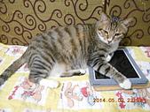 氣質貓咪~~~:DSCN1945.jpg