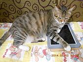 氣質貓咪~~~:DSCN1946.jpg