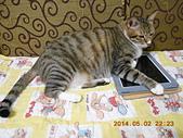 氣質貓咪~~~:DSCN1947.jpg