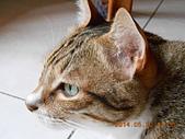 氣質貓咪~~~:DSCN1975.JPG