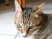 氣質貓咪~~~:DSCN1977.JPG