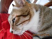 氣質貓咪~~~:DSCN1985.JPG