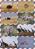 東南非 East & South Africa:安波沙利國家公園