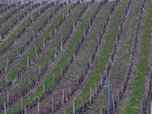 法國:希儂古堡葡萄園