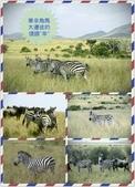 東南非 East & South Africa:黑白馬