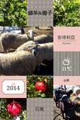 土耳其Turkey:近距離接觸羊群與果樹。