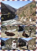 不丹, 錫金,孟加拉Bhutan, Sikkim and Bangladesh:對牛彈琴?