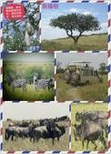 東南非 East & South Africa:香腸樹