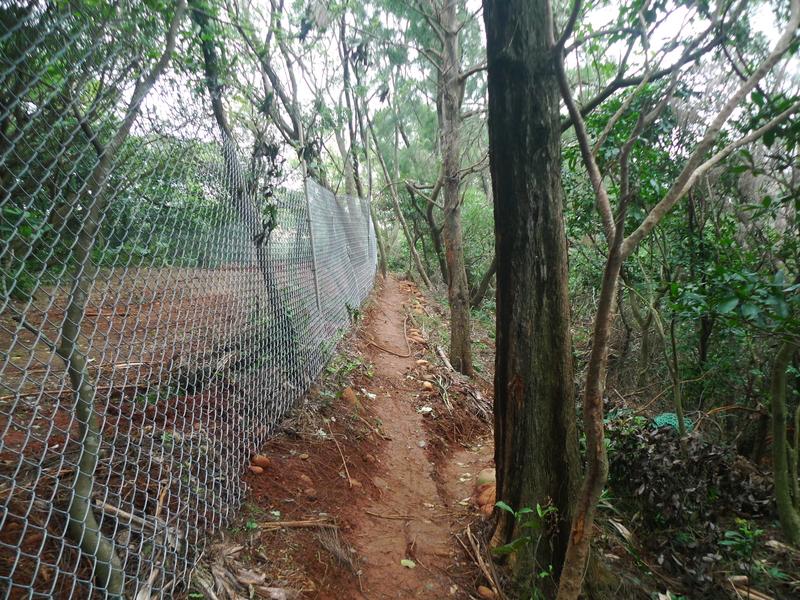 福人登山步道(桃園楊梅):P1260119.JPG