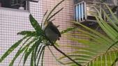 東勢格古道:P_20200709_061939.jpg