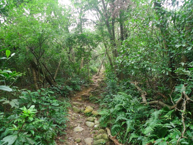 福人登山步道(桃園楊梅):P1260115.JPG