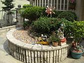 2009夏香草風情-花園篇:CIMG6981.JPG