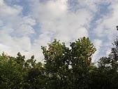 20081102虎頭山:CIMG4376.JPG