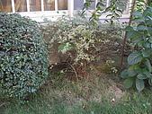 20081221香草別墅:CIMG4770.JPG