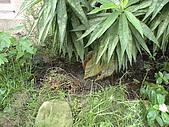 20081004香草植物:DSC03790.JPG