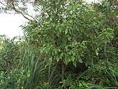 20081102虎頭山:CIMG4384.JPG