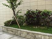 2009夏香草風情-花園篇:CIMG6988.JPG
