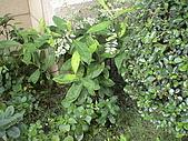 20081004香草植物:DSC03795.JPG