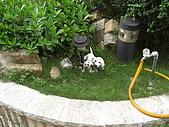 2009夏香草風情-花園篇:CIMG7016.JPG