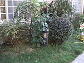 20081221香草別墅:CIMG4769.JPG