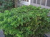 20081221香草別墅:CIMG4792.JPG