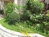2009夏香草風情-花園篇:CIMG6970.JPG