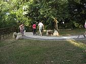 20081102虎頭山:CIMG4375.JPG