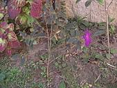 20081221香草別墅:CIMG4784.JPG