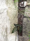 20081004香草植物:DSC03784.JPG