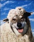 汪汪~:批著羊皮的狗