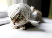 喵嗚~:貓兒也有白髮蒼蒼的一天.jpg